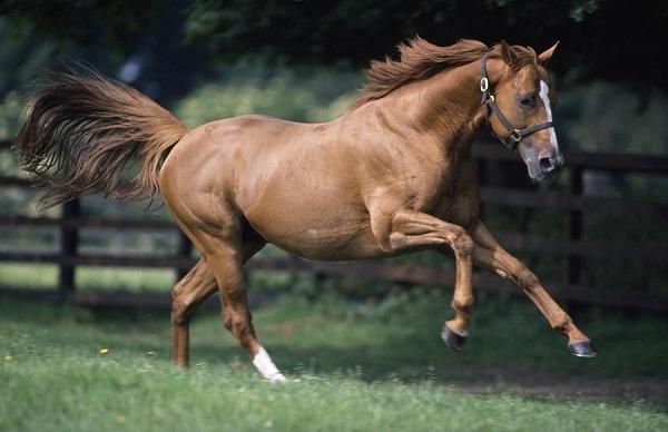 Web Design, Development, Marketing, SEO Consultancy for Equestrians, Equine, Horse Industry